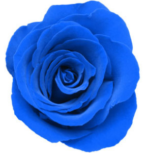 blue-rose-top-300x309